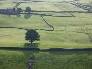 Sheep sheltering under a tree in Crimsworth Dean