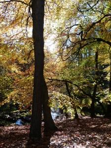 Crimsworth Dean in October