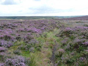 Wadsworth Moor