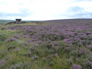 Shaft protruding from heather on moor above Pecket Well